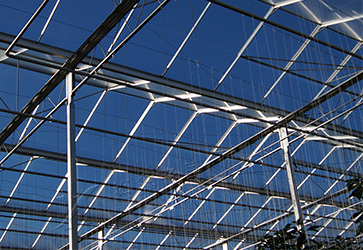 Yuxin Longchang 50% Haze Greenhouse Glass
