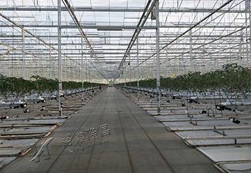 Binhai Agricultural Tourism Langkun Agricultural Science Park Glass Greenhouse Project